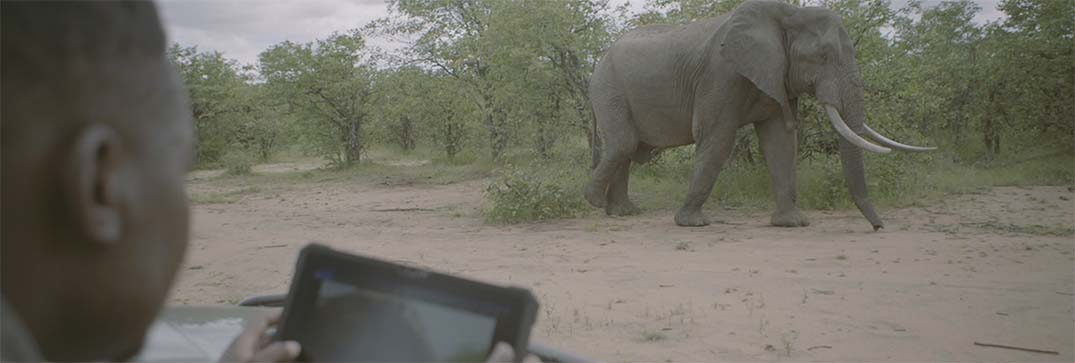 Tech plays its part in elephant conservation